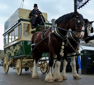 Shire Horses with carriage